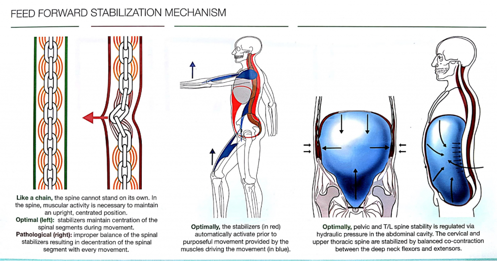 Feed Forward Stabilization Mechanism -Exercises that cause back pain